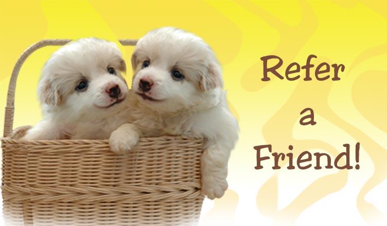 Refer a Friend Program
